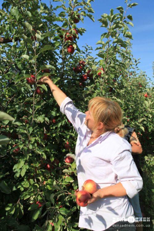 Сварожі фрукти та процес їх вирощування сертифіковані за найвищими світовими стандартами