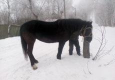Рецидивіст попався на крадіжці коня