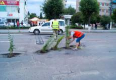 У Шепетівці активісти засадили ями на дорогах кущами