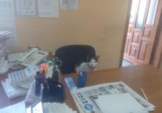У Шепетівці кіт Буржуй ходить у редакцію, як на роботу