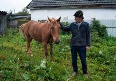 Як живеться коневі у Шепетівці?