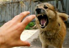 У Шепетівці застрелено собаку, який напав на дівчинку