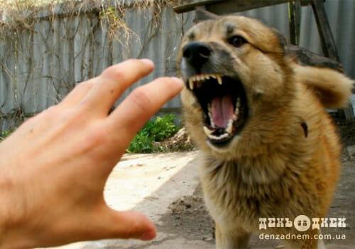 У Шепетівському районі лис міг заразити сказом домашню собаку