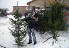 На Шепетівщині полісмени та лісівники оберігають ялинки