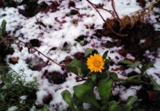 Аномальна зима, або З Новим роком, Шепетівко!