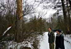 На Шепетівщині обговорювали, як зупинити вершинного короїда