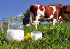 Надої молока на Хмельниччині зросли