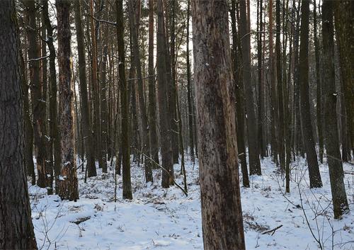 Шепетівські лісівники затримали бракон'єрів