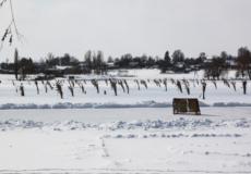 На Шепетівщині рибу рятують лунками з очеретом