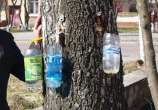 На Шепетівщині збирач березового фрешу знайшов міну (Оновлено)