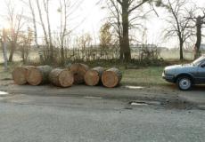 У Шепетівському лісництві зловили крадіїв дубів