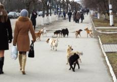 Що чекає безпритульних чотирилапих Шепетівської територіальної громади