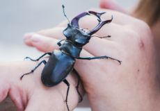 Найдорожчу комаху в світі у Шепетівці частували сиропом