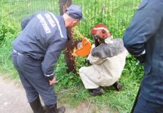 У Шепетівці надзвичайники врятували кошеня