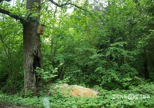У Шепетівці в лісову криницю викинули жорстоко вбитих собак