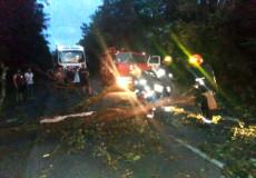 У Шепетівському районі дерево перекрило рух по дорозі на Новоград-Волинський