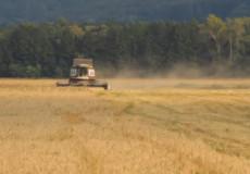 У Шепетівському районі аграрії не встигають за злодіями