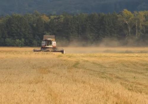 Скільки озимих культур засіяно під урожай 2019 року в господарствах Хмельниччини?