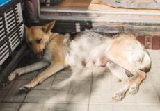 У Шепетівці кошти на стерилізацію собак збирають самотужки