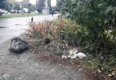 Хто прибирає мертвих тварин із вулиць Шепетівки?