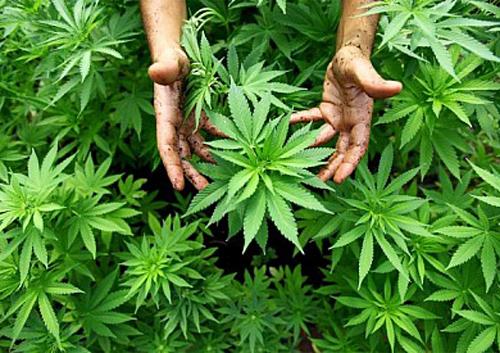 Суд призначив шепетівчанину шість років з конфіскацією за наркоторгівлю