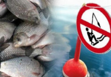За незаконний вилов риби чоловік позбувся і спорядження, і улову