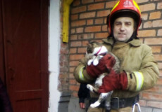 Шепетівські надзвичайники врятували кошеня, яке забралось на самісіньку верхівку дерева