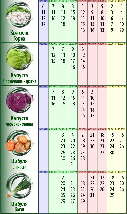 Посівний календар: квасоля (горох), капуста, цибуля