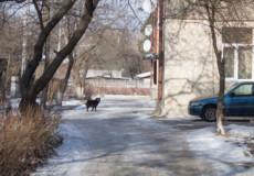 У Шепетівці 86-річну пенсіонерку ледь не загризла дворова собака
