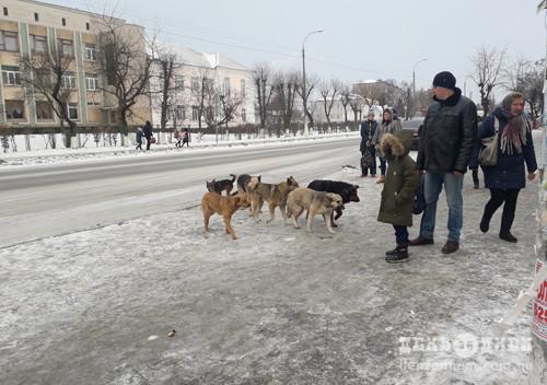Місцеві органи влади несуть відповідальність за напад на людину безпритульної собаки