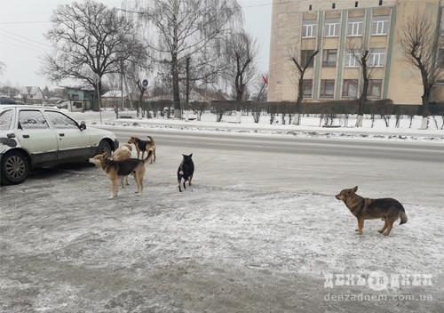 У Славуті оголосили тендер на утримання притулку для тварин