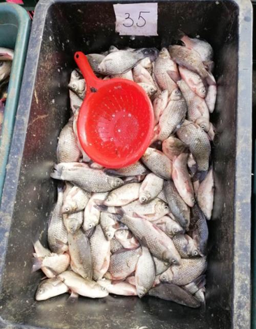 На Хмельниччині заборонено ловити рибу
