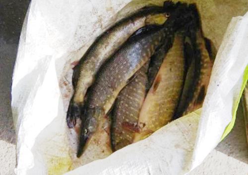 Чи можна рибалити в орендованих ставках Хмельниччини?