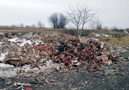 Тваринні відходи з Тернопільщини у Шепетівку не доїхали