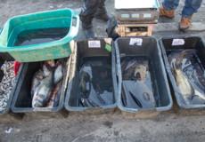 Мешканку Полонського району оштрафували за збут риби на 510 гривень