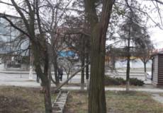 У Шепетівці через негоду деревопад
