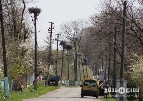 У лелечому селі на Шепетівщині чекають на поповнення бузьок