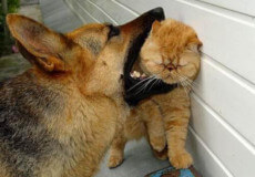 Скажений пес погриз кота та подряпав хазяйку