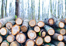 На Ізяславщині лише 4 із 16 лісогосподарств запровадили електронний обіг деревини