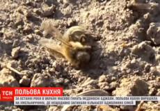 У загиблих на Славутчині бджолах пестицид перевищував смертельну дозу у 15 разів