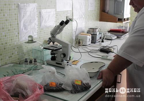 «Репутація» шепетівської чорниці, за висновками лабораторних перевірок,— не заплямована
