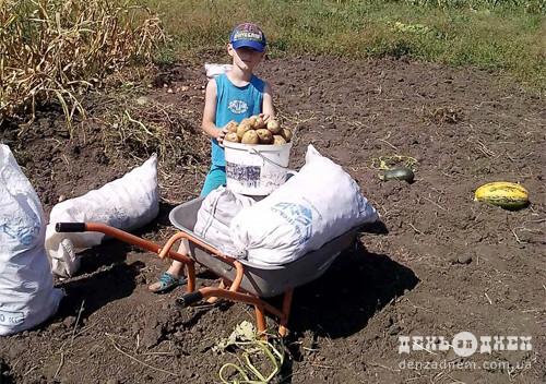 Цьогоріч мішок картоплі на Шепетівщині вартує 16 доларів