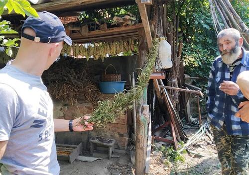 На Хмельниччині копи знайшли незаконний посів конопель