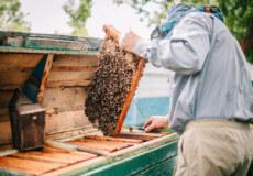 Аграрії Ізяславщини попередили пасічників про небезпечний тиждень для бджіл