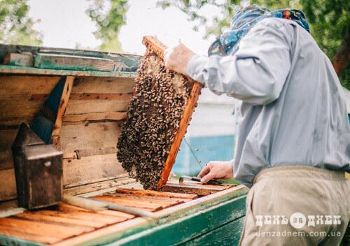 Пасічники Хмельниччини можуть отримати до 60 тисяч дотації за бджолосім'ї