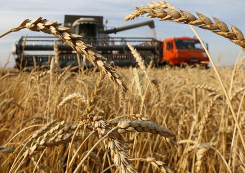Перший мільйон тонн зерна та пожежі: жнивна кампанія на Хмельниччині