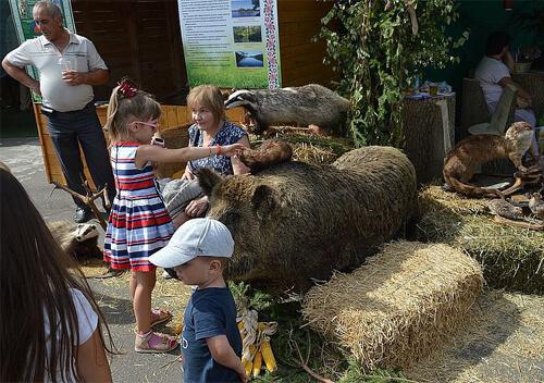 Шепетівські лісівники представили на виставці смаколики та дерев'яні вироби