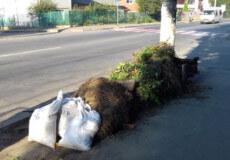 Хмельницький полігон безкоштовно прийматиме «зелені відходи» та листя