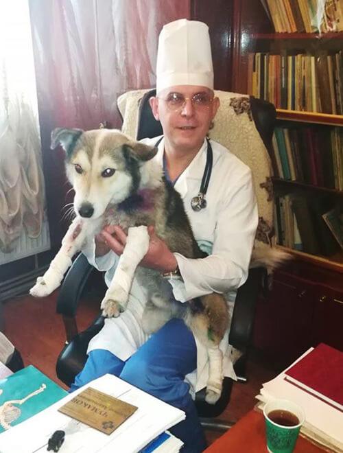 Справа про знущання над собакою хмельницьким посадовцем на контролі Міністерства внутрішніх справ