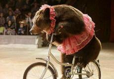 Із українських цирків зникнуть шоу з тваринами